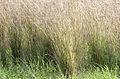 Grass 07.jpg