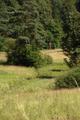 Grebenau Grebenau NR 165502 Schwarzenbachsgrund Schwarzenbach Meadow Shooting stand.png