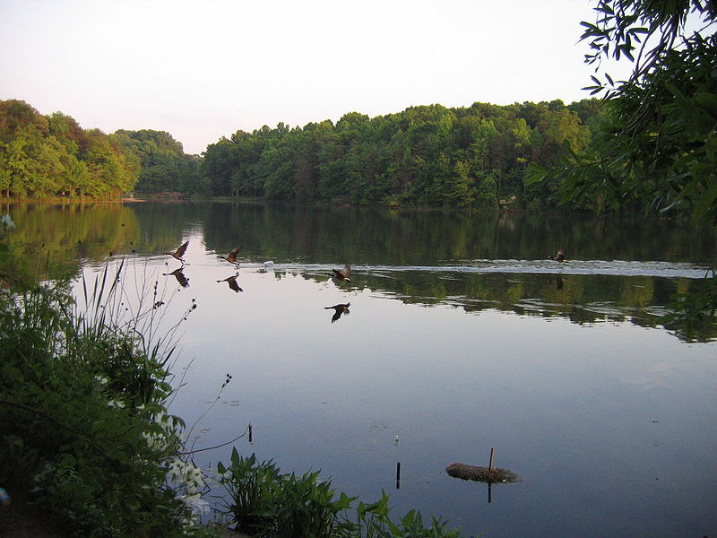 File:Greenbelt - Albert S Buddy Attick Lake Park 06.JPG