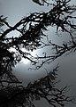 Grey Day (24765477212).jpg