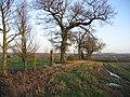 Grown out hedgerow, Snowford - geograph.org.uk - 332737.jpg