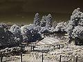 H20160919-0004—Berkeley Rose Garden in Infrared (29192597684).jpg