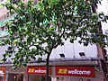HK WC tram view 灣仔 Wan Chai 莊士敦道 Johnston Road Wellcome store supermarket September 2019 SSG 08.jpg