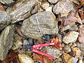 HOBO Temperature logger tied to a river rock.jpg