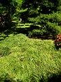 Hakone Gardens, Saratoga, CA - IMG 9163.JPG