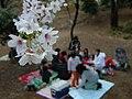 Hanami branch.jpg