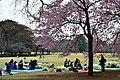 Hanami in Shinjuku Park - panoramio.jpg