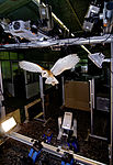 Happy the Barn Owl on flight trials (5658045444).jpg