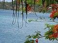 Harbour Colours Port Vila (4273975530).jpg