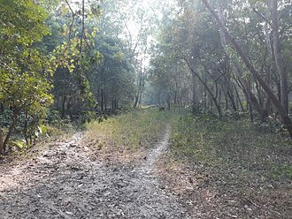 Haringhata - Haringhata Forest beside Dairy farm. Nadia