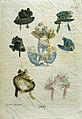 Hattmode. Modeplasch ur Magasin för Konst, Nyheter och Mode från 1827 - Nordiska Museet - NMA.0032516.jpg