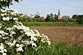 Hawthorn blossom - geograph.org.uk - 799885.jpg