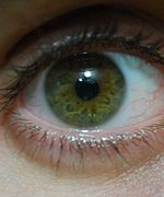 Hazel green eye close up.jpg Brown Eyes Iris