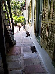 HemingwayAlleyCat.jpg