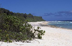 Henderson Island (Pitcairn Islands) - A view along the northern beach