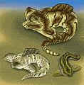 Heterosteidae.jpg