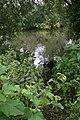 Hidden in the undergrowth - geograph.org.uk - 1422660.jpg
