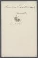 Himantopus sannio - - Print - Iconographia Zoologica - Special Collections University of Amsterdam - UBAINV0274 113 17 0019.tif