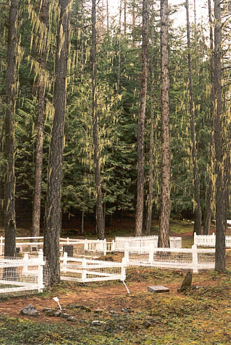 Ainsworth, British Columbia - Tall Cedar trees with hanging 'Angel Hair' in the historic Ainsworth Cemetery.