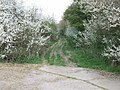 Hobb's Lane (Track) from Harvey's Lane - geograph.org.uk - 397230.jpg