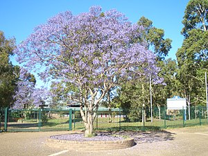 Holsworthy, New South Wales - Holsworthy High School