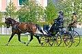 Horse driving at Stiegl 2011 11.jpg