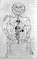 Human figure showing arteries and viscera, Persian, 18th C Wellcome L0018748.jpg