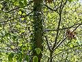 Hummingbird in PP (72065).jpg