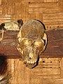 Hunting Primates IMG 3386 02.jpg