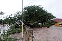 A large tree knocked over on a fence. The ground throughout the image is wet and near the tree, it is torn by the roots.