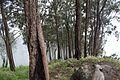 Hutan di Gunung Arjuno.jpg