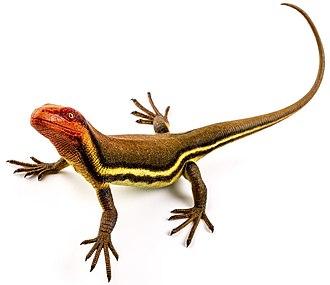 Hylonomus - Model