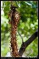 Hymenoptera (6022580426).jpg