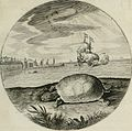 Iacobi Catzii Silenus Alcibiades, sive Proteus- (1618) (14562929770).jpg