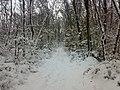 Iarna in padurile Bretelinului - panoramio.jpg