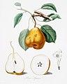 Illustration from Pomona Italiana Giorgio Gallesio by rawpixel00004.jpg