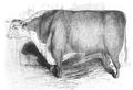 Illustrirte Zeitung (1843) 12 184 1 Hereford-Bulle des Herrn Jeffries.PNG