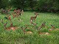 Impalas (Aepyceros melampus) (6041071521).jpg