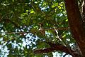 India - TN - 11-01 - Auroville - 04 (5444856701).jpg