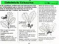 Infotafel Einheimische Eichenarten.jpg