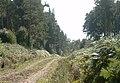 Inshoch Wood - forestry road - geograph.org.uk - 251925.jpg
