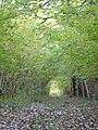 Inside Hill Copse, near Woodyates - geograph.org.uk - 278232.jpg