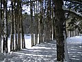 Iroquoian Village, Ontario, Canada32.JPG
