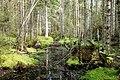 Isojärvi National Park 4.jpg
