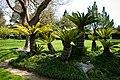 Japanese Friendship Garden (4526458451).jpg