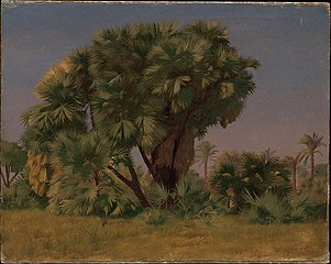 Study of Palm Trees