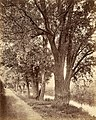 Johannes Nöhring Bäume.jpg