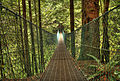 Juan de Fuca Trail Suspension Bridge.jpg