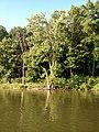 July 2016 Crooked Creek adventure - panoramio - Ron Shawley (40).jpg