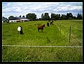 June Fruits Farming Horses - Master Seasons Rhine Valley 2013 - panoramio.jpg